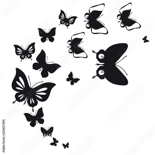 Fototapeta black butterfly, isolated on a white