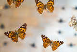 Butterfly in museum with audiences - 220638023