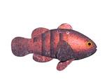 Goldfisch im Wasser