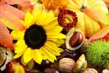 Herbst - 220675843