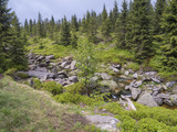 spring mountain stream Bila Smeda with stones and boulders, spruce tree forest - 220682460