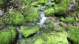 Beautiful mossy rocks with stream in slow motion. - 220693849