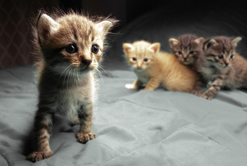 Small adorable kittens on the bed. Cute pets indoors © stryjek