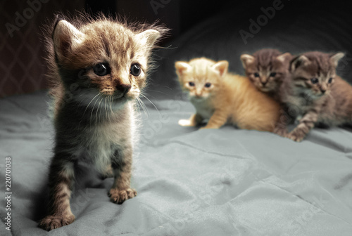 Małe urocze kocięta na łóżku. Słodkie zwierzęta w pomieszczeniu