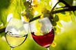 Leinwandbild Motiv Anstoßen im Weingut