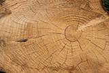 Fototapeta Las - Matière bois tronc arbre texture © shocky