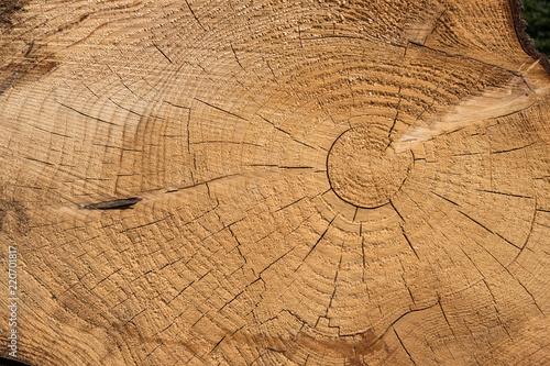 Matière bois tronc arbre texture - 220701817