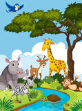 Wild animals in nature - 220727038