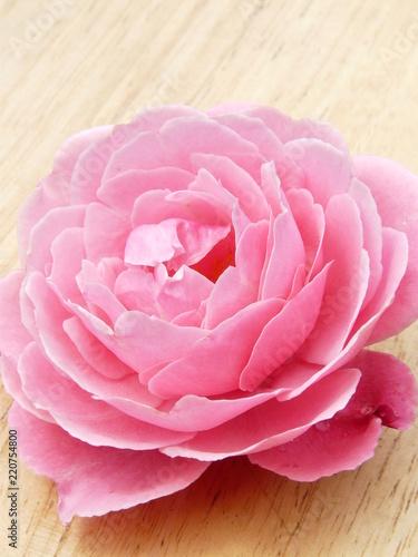 rosaceae pink rose bleach wood 8 - 220754800