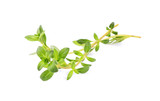 Thyme herb  isolated. - 220776004