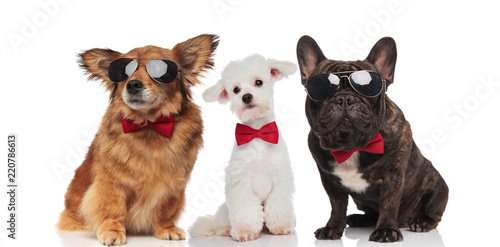 three stylish dogs of different breeds wearing sunglasses and bowties
