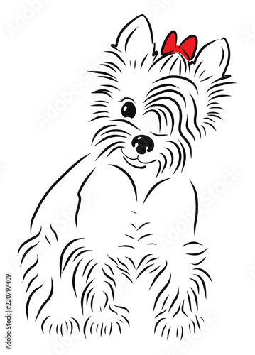 A Vector Illustration Of A Yorkshire Terrier Buy Photos Ap
