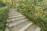 Green trail in Arashiyama, Kyoto, Japan