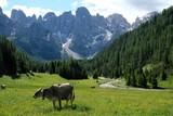 paesaggio montagna mucca prato verde alberi foglie fiume bosco foresta estate parco all'aperto natura alpi pascolo fattoria bestiame