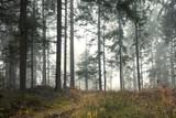 Beautiful morning misty forest tree landscape.  - 220826263