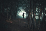 Back view of a woman silhouette walking alone along the forest path. - 220826439