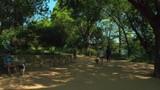 Hike and bike trail Austin Texas - 220835649