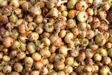 onion texture - 220846477