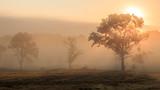 Misty trees on foggy morning / Bäume im Nebel in Lüneburger Heide - 220846855