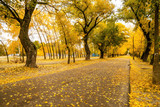Autumn road in the city Park - 220861443