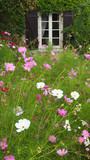 Landleben: Fenster zur Blumenwiese - 220870415
