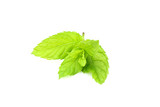 Mint, melissa branch isolated. - 220877222