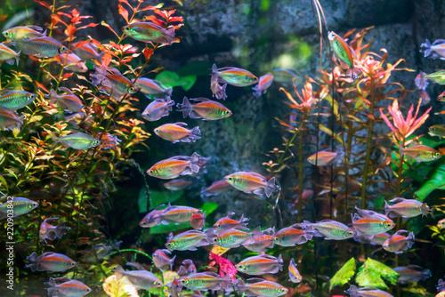 A flock of fish in the aquarium