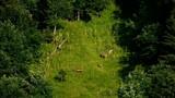 Deer grazing on a mountain slope in Switzerland - 220909093