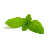 mint leaves isolated on white - 220939890