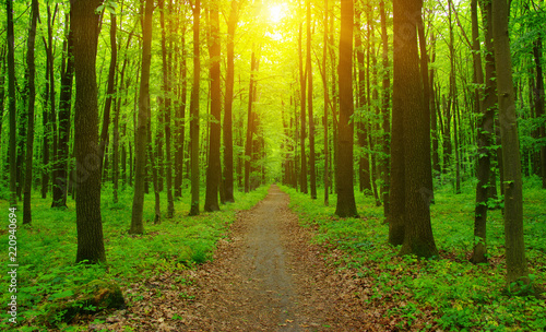 Foto Murales Forest  and sun rays
