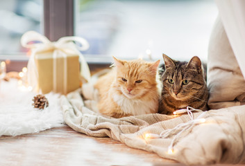 pets, christmas and hygge concept - two cats lying on window sill with blanket and present at home