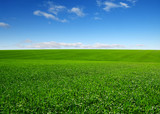 green field and clouds - 220943825