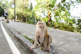 Little nice macaco sitting on road in India. Concept of asian fauna and exotic place. - 220953641