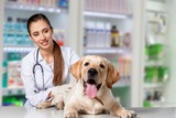 Beautiful young veterinarian with a dog on a white background - 220970296