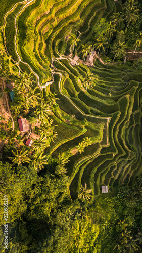 Vista aérea de las terrazas de arroz de Tegalalang, Bali. - 220985209