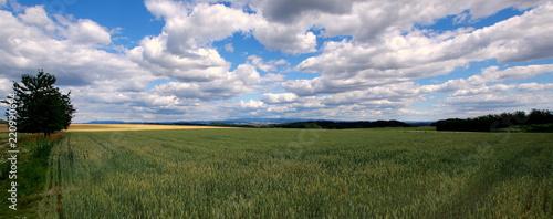 Polski wiejski krajobraz, pole obsiane pszenicą pod białymi obłokami