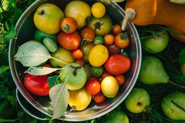 Assortment of organic farm fresh vegetables