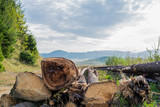 Illegal cutted , abandoned pine wood logs close up shot, deforestation conceptual image. - 220996073