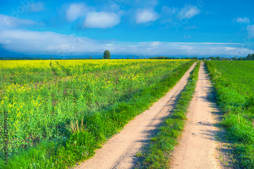 Fototapeta The road leading through thecolza fields. Masuria, Poland.