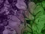 flowers - 221008430