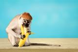 Monkey. - 221020860