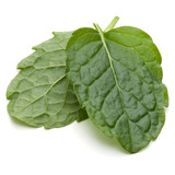 Peppermint herb isolated on white background cutout. Mint leaves. - 221036454