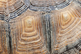 turtle shell detail - 221059403