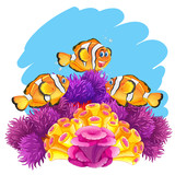 Crown fish playing in coral reef