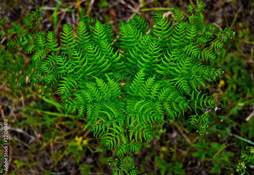 Fern plant. Green nature wealth - 221063618