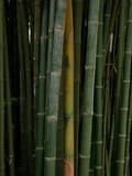 green bamboo nature background