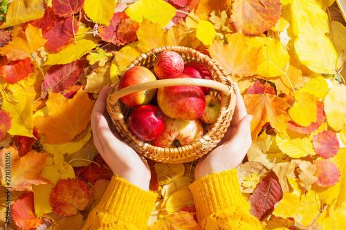 Leinwandbild Motiv  apple in hand on background of autumn leaves