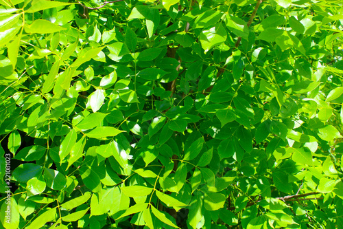 Green foliage background - 221081023