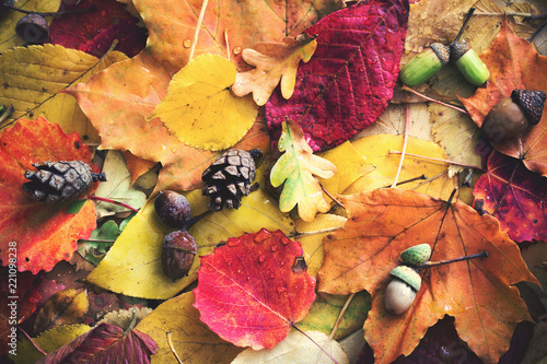 Leinwanddruck Bild autumn leaves with water drops