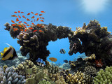 Underwater shoot of vivid coral reef with a fishes - 221100069